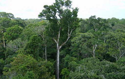 पेड़ों का महत्व पर निबंध I Essay on Importance of Trees in Hindi