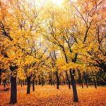 10 Lines on Autumn Season in Hindi शरद ऋतुपर १० पंक्तियाँ हिंदी में