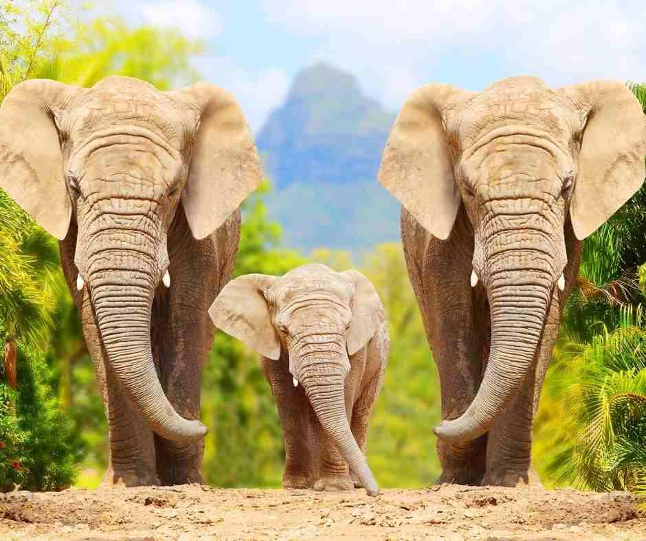 10 Lines on Elephant in Hindi हाथीपर १० पंक्तियाँ हिंदी में