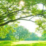 10 Lines on Tree in Hindi पृथ्वी पर 10 पंक्तियां हिंदी में (1)